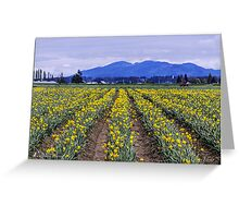 Fields of daffodils Greeting Card