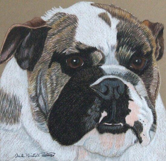 English Bulldog Vignette by Anita Meistrell Putman