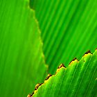 Green Leaf by jswolfphoto
