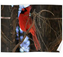 Lonely Red Bird  Poster