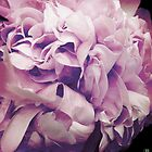 peony by debschmill