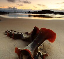 Bullkelp by Garth Smith