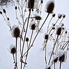 WINTER BURDOCK by cammisacam