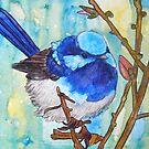Susie's Blue Wrens III by Alexandra Felgate