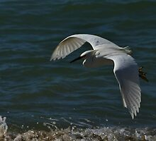 White Flight by fototaker