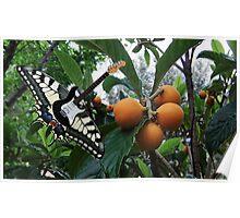 Tutti Frutti Poster