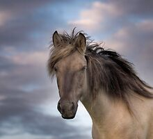 A horse with no name by Henri Ton