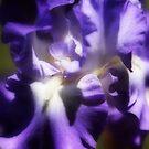 City Lights Iris with Orton Effect by Robert Armendariz