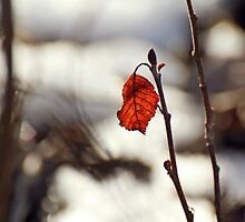 Autumn Leaf by HiMyNameIsJeffy