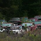 Old Car Graveyard by Denise N Young
