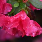 Waterlogged Pink Azalea by TheaShutterbug