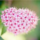 tiny pink flowers... by karenanderson