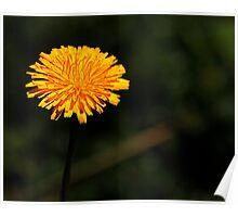 Grow a little sunshine Poster