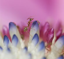 ant ... by karenanderson