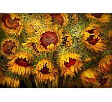 Flowers - Sunflowers - You're my only sunshine Photographic Print
