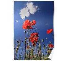 Summer poppys Poster