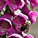 Fox Glove and Bee by browncardinal8