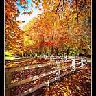 Autumn At It's Best by Andy Eftichiou