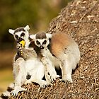 Lemurs Don't Share by Josie Eldred