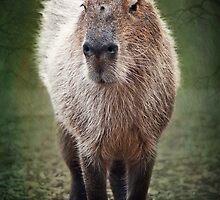 Capybara by Lissywitch