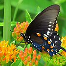 A Butterfly's Delight by lorilee