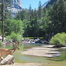 Mirror Lake and the Buck by David Denny