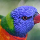 Rainbow Lorikeet, Rockhampton - Queensland.  by Margaret Stanton