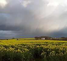 Oil Seed Rape by Richard Durrant