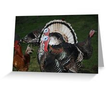 Turkeys! Greeting Card