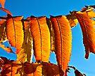Autumn by Ubernoobz