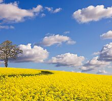 Tree in Field by Ian Merton