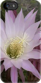 Cactus flower blossom iphone case by shelfpublisher
