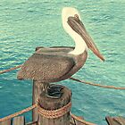 Brown Pelican by Walter Colvin