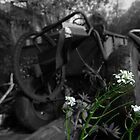 Tractor and Wild Flower by BonnieToll
