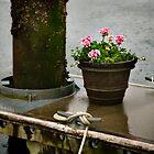 Dockside Garden by Lynnette Peizer