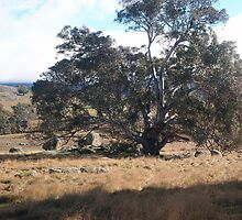 The tree stands alone in this serene setting Sutton Grange VIC Australia by Margaret Morgan (Watkins)