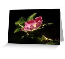 Wild Dog Rose Greeting Card
