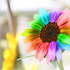 Rainbow Sunflower by WDaRos714