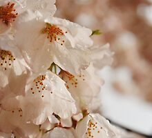 Welcoming Spring by Daniela  Chur