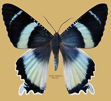 Alcides Agathyus Butterfly by Walter Colvin