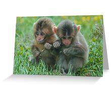 Baby Snow Monkeys Greeting Card