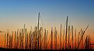 Masts by collpics