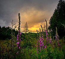 Foxglove Love by Charles & Patricia   Harkins ~ Picture Oregon