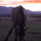 Wild Horse Sunset by Mickey Hatt