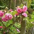 FENCED ROSES by Lynn Wright