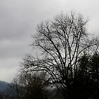 Winter Tree Silhouette - After the Storm #5 by Paula Tohline  Calhoun