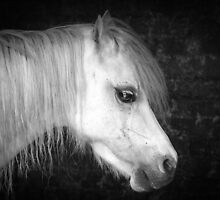 Grey Welsh in Black & White by Mark Hughes
