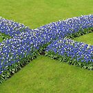 The Big Blue X - Keukenhof Gardens by BlueMoonRose
