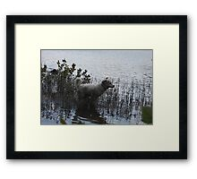Water Adventure Flying Goliath Framed Print