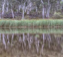 Australian Reflections by Dianne English